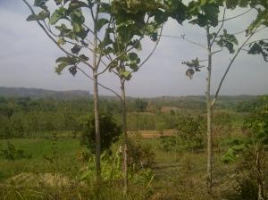 IMG-20120707-01248